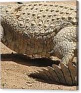 White Crocodile Canvas Print