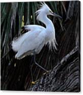 White Egret Canvas Print