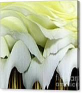White Rose Polar Coordinates Canvas Print