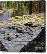 Wild Water Lilies In The River Canvas Print
