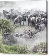 Wildebeest Migration 1 Canvas Print
