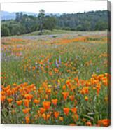 Wildflower Wonderland 10 Canvas Print