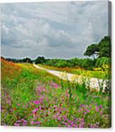 Wildflower Wonderland Canvas Print