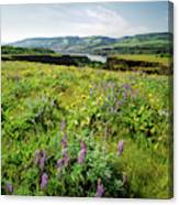 Wildflowers In A Field, Columbia River Canvas Print