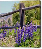 Wildflowers On The Fence Canvas Print