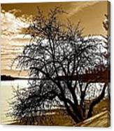 Willow On Silver Lake Canvas Print