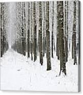Winter Alley Canvas Print