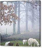 Winter Lambs Foggy Day Canvas Print
