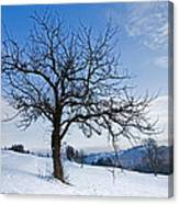 Winter Landscapes Canvas Print