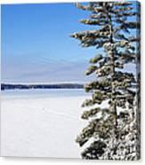 Winter Light Canvas Print