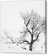 Winter Sage Canvas Print