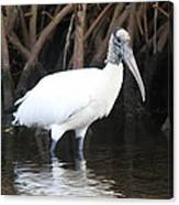 Wood Stork In The Swamp Canvas Print