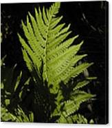 Woodland Fern Canvas Print