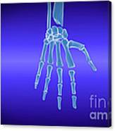 X-ray View Of Human Hand Canvas Print
