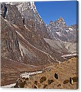 Yaks Grazing In A Himalayan Valley Canvas Print