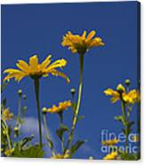 Yellow Buttons Canvas Print