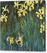Yellow Irises  Canvas Print
