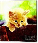 Yellow Kitten Canvas Print