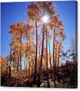California, Sierra Nevada Mountains Canvas Print