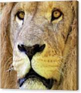 Lion Dafrique Panthera Leo Canvas Print