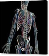 Human Vascular System Canvas Print