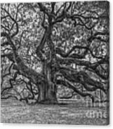 Angel Oak Tree In Black And White Canvas Print