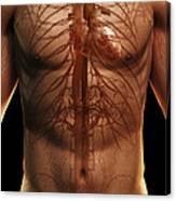 The Cardiovascular System Canvas Print