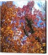 Autumn Color Canvas Print