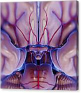 Brain With Blood Supply Canvas Print