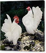 23. Pair White Serama Canvas Print