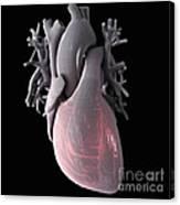 Heart Anatomy Canvas Print