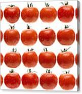 24 Tomatoes Canvas Print