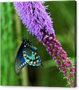 243 Butterfly Canvas Print