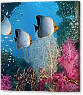 Coral Reef Scenery Canvas Print