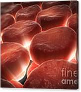 Red Blood Cells Canvas Print