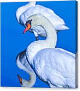 Mute Swans Canvas Print