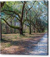 Allee Of Oaks Canvas Print