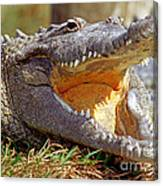 American Crocodile Canvas Print