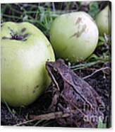 3 Apples And A Frog Canvas Print