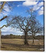 3 Appleton Trees Canvas Print