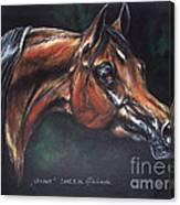 Arabian Horse  Canvas Print