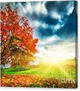 Autumn Fall Landscape In Park Canvas Print