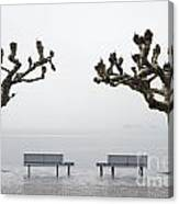 Benches And Trees Canvas Print