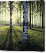 Birch Trees By The Vuoksi River Canvas Print