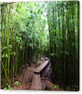 Boardwalk Passing Through Bamboo Trees Canvas Print