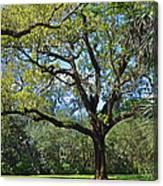 Bok Tower Gardens Oak Tree Canvas Print