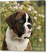 Boxer Puppy Canvas Print