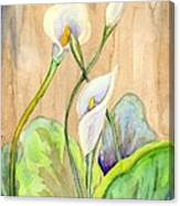 3 Calla Lilies Canvas Print