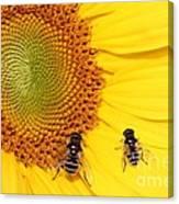 Chipmunk's Peredovik Sunflower Canvas Print