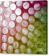Colorful Straws Canvas Print